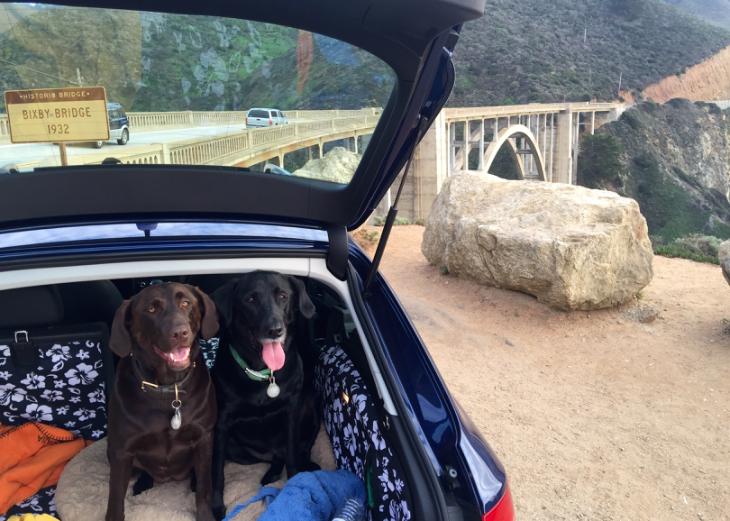Chris's labs don't fly- but they love a good road trip!  At Bixby Bridge along California's Pacific Coast Highway. (Chris McGinnis)