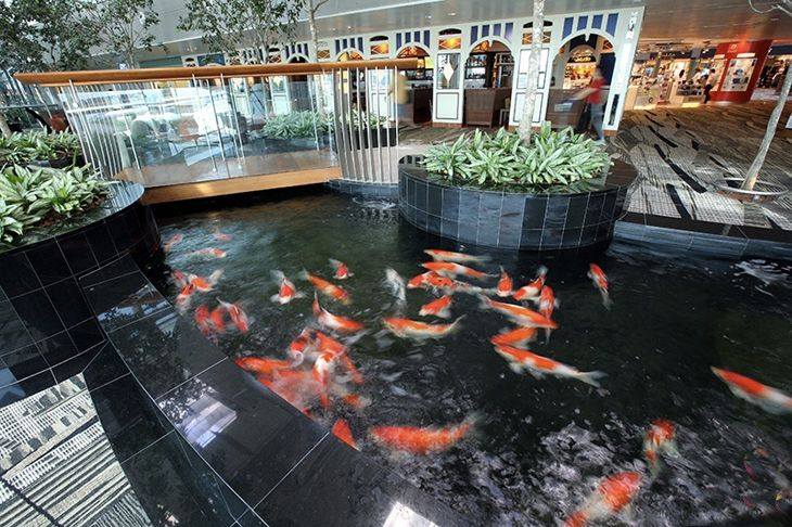 How many airports have a koi pond? Singapore Changi does, in Terminal 3. (Image: Changi Airport)