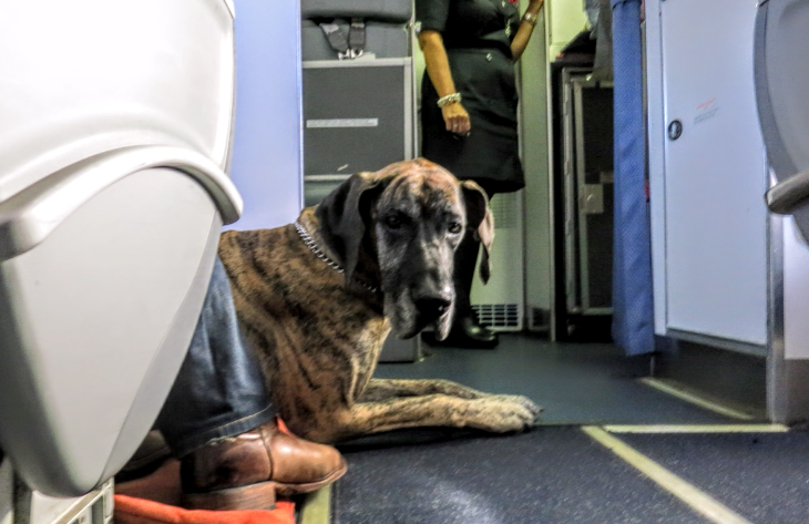 Kicking support animals off the plane travelskills for Airlines that allow dogs in cabin
