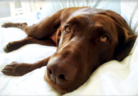 Popular: Dogs on planes   SkyClubs   Marriott's big move   100,000 points   Mis-pronounced foods