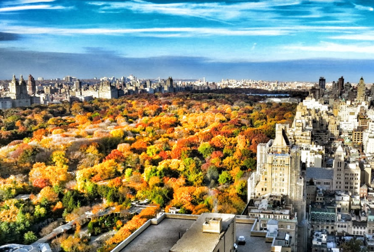 Fall autumn leaves New York