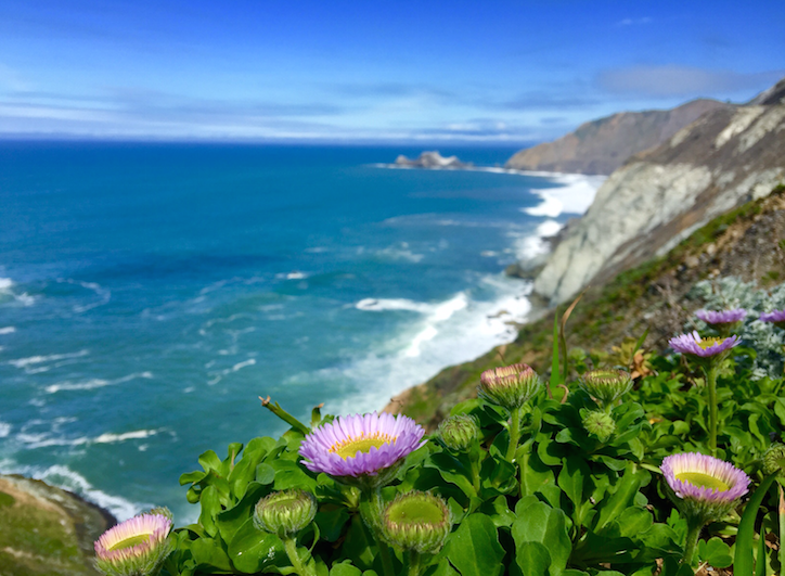 Spring has sprung along California's western edge- Devil's Slide, 30 mins south of SF (Photo: Chris McGinnis)